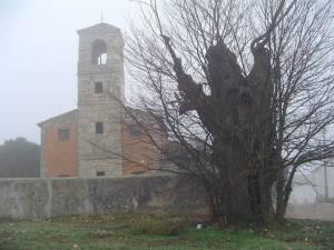 La olma y la iglesia de La Mierla