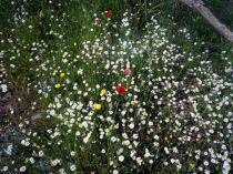 130612 otras flores 1