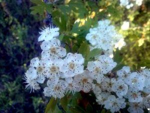 130612 otras flores 3