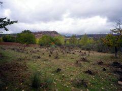 131115 viñas silvestres 1