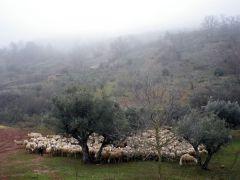 140205 oveja negra 1