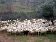 140205 oveja negra 2