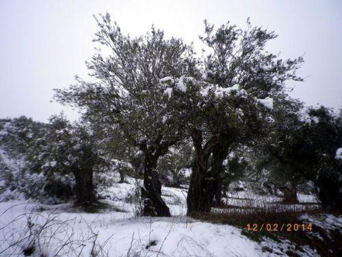 140221olivos nieve 2