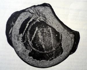 Ceramica sigillata de Los Quintanares