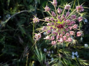 140606 flores junio 1