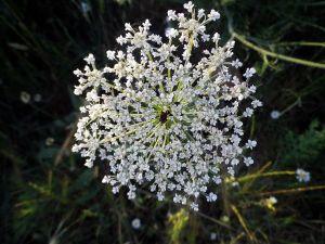 140606 flores junio 3