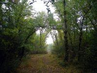 141103 caminos verdes 2