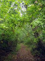 141103 caminos verdes 4