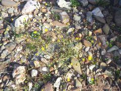 141105 otras flores 1