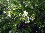 141105 otras flores 3