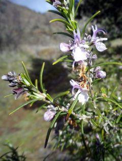 150319 flor enebro 3