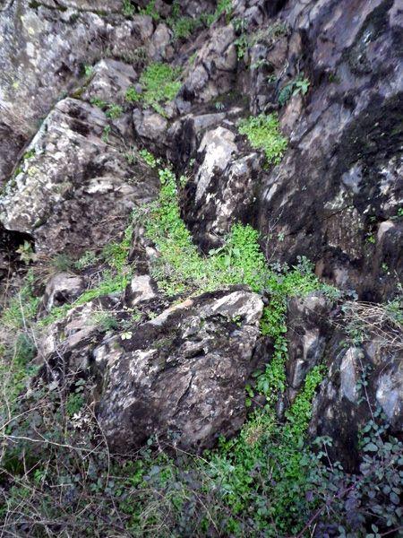 Jardin vertical blog de la vereda de puebla for Jardin vertical caixaforum