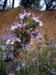 150417 flor romero 2
