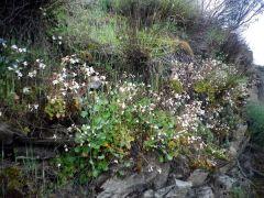 150428 flores pizarra 1