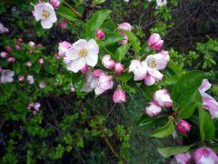 150428 flores pizarra 2