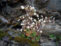 150428 flores pizarra 4
