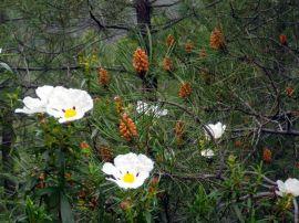 150512 en flor 2