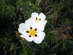 150512 en flor 3