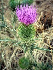 150902 Botanica agosto 1