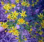 150902 botanica agosto 3