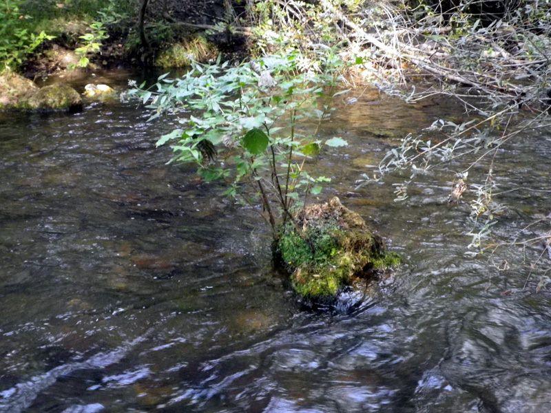 Sierra Norte de Guadalajara, naturaleza en estado puro (1/4)