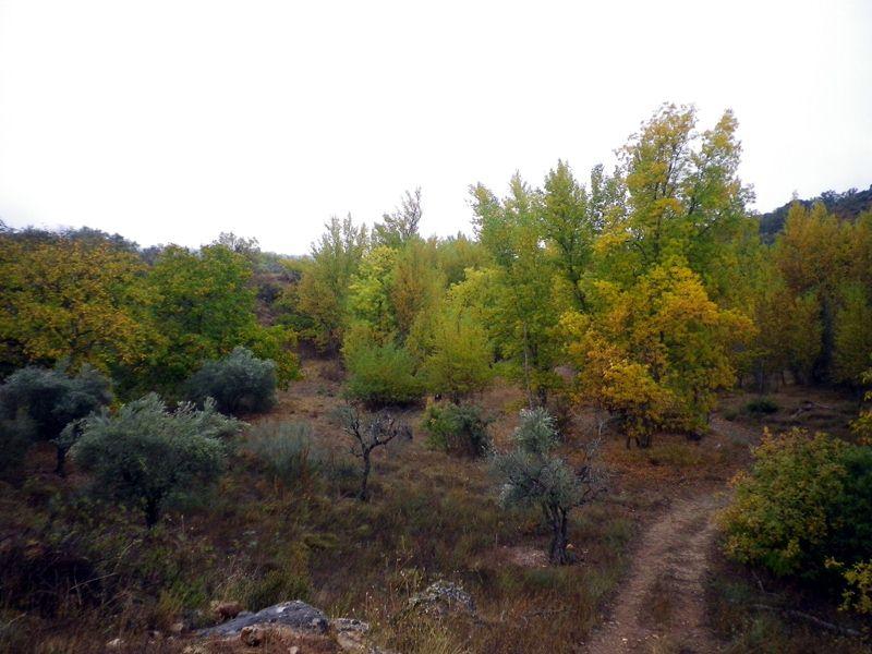 El cañón del Jarama en otoño (2/3)