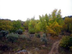151103 otoño 2