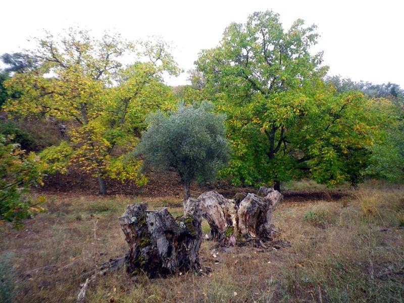 El cañón del Jarama en otoño (3/3)