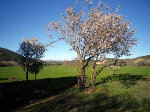 160406 primavera 1