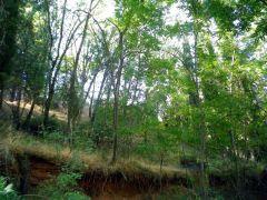 160921-bosque-verano-2