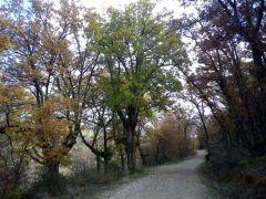161229-camino-bonaval-3