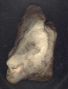 170125-cabeza-leon